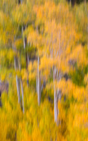 Fall Colors Aspens Abstract