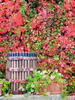 Vintage Wine Press Autumn Colors