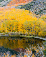 Sierras Fall Color Reflection