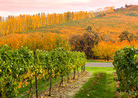 Dry Hollow Valley Vineyards & Orchards